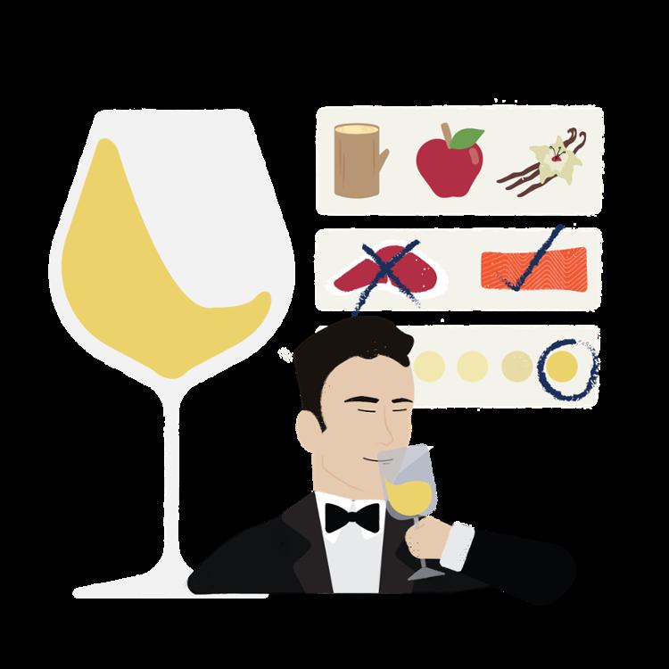 definitive wine training guide landing page illustration-02-1